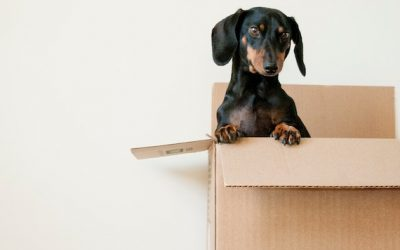 5 Feng Shui Tips for Moving